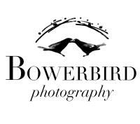 Bowerbird Photography